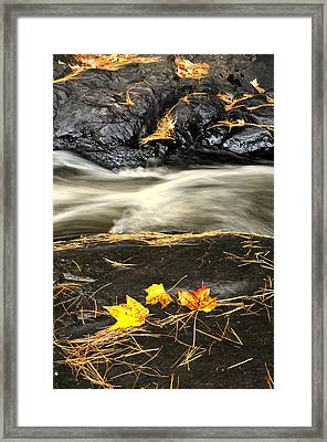 Maple Leaves And Water Framed Print by Douglas Pike