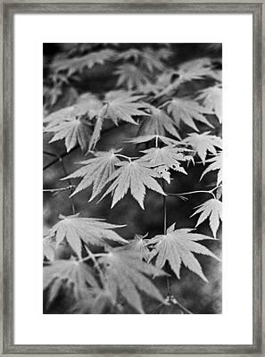 Maple Leaves In Seoul Framed Print by Julie VanDore