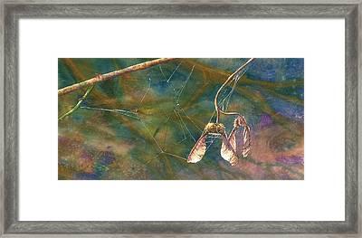 Maple Magic Framed Print by Melinda Wilde