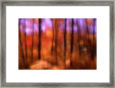 Maple Trees In Autumn, Gatineau Park, Quebec, Canada Framed Print