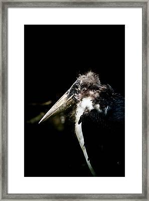 Marabou Stork Framed Print by Hakon Soreide