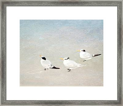 Framed Print featuring the photograph Marco Trio by Karen Lynch