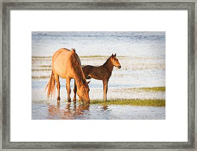 Mare And Foal Framed Print by Bob Decker
