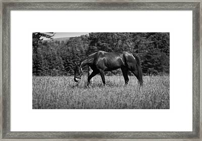 Framed Print featuring the photograph Mare In Field by Davandra Cribbie