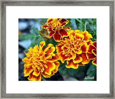 Marie Framed Print by LC  Linda Scott