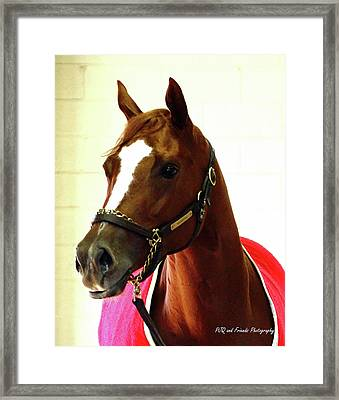 'marigo In Red' Framed Print by PJQandFriends Photography