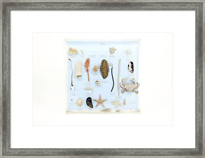 Marine Life Specimens Framed Print by Gregory Davies, Medinet Photographics