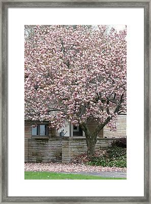 Marinette Magnolia Framed Print by Mark J Seefeldt