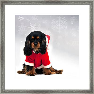 Marmaduke With Snowflake Background Framed Print