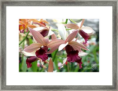 Framed Print featuring the photograph Maroon Bloom by Debbie Hart