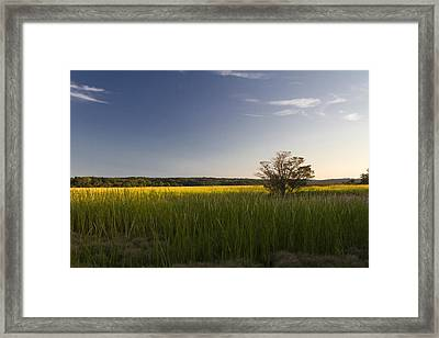 Marsh Framed Print by Bob Retnauer