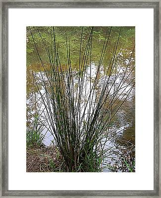Framed Print featuring the photograph Marsh Grass by Renee Trenholm