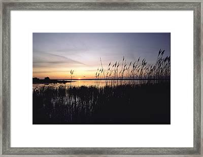 Marsh Grasses And Sunset Framed Print