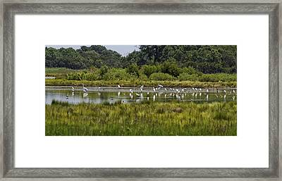 Marsh Life Framed Print by Mary Jo Taft