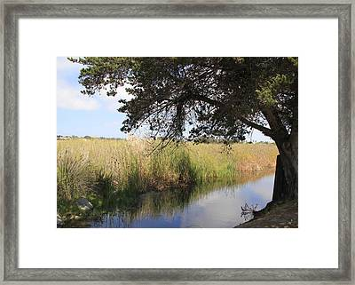 Framed Print featuring the photograph Marsh Reflections by Jan Cipolla