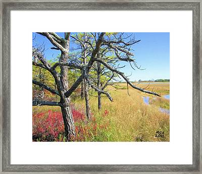 Marsh Trees Framed Print by Richard Stevens