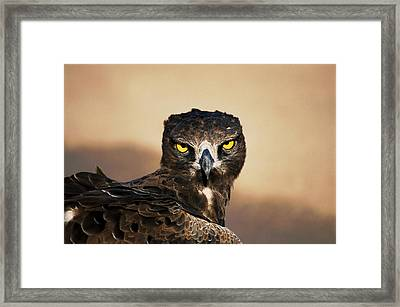 Martial Eagle Portrait Framed Print