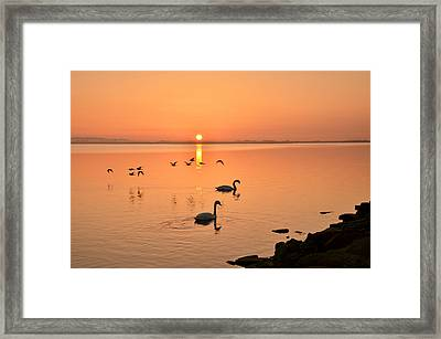 Martina Fagan Sunrise Fly By Framed Print