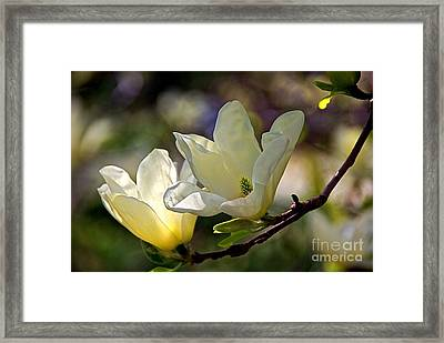 Marvelous Magnolia Framed Print by Byron Varvarigos