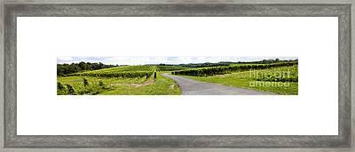 Maryland Vineyard Panorama Framed Print by Thomas Marchessault