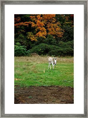 Marys Donkey Framed Print by LeeAnn McLaneGoetz McLaneGoetzStudioLLCcom