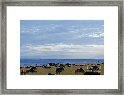 Masai Mara Framed Print by Pravine Chester