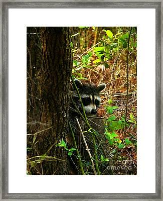 Masked Bandit Framed Print by Dawn Williamson