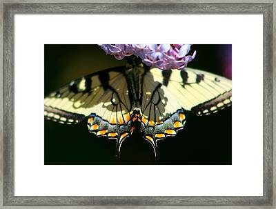 Masked Monarch Framed Print