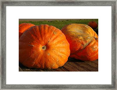 Mass Pumpkins Framed Print