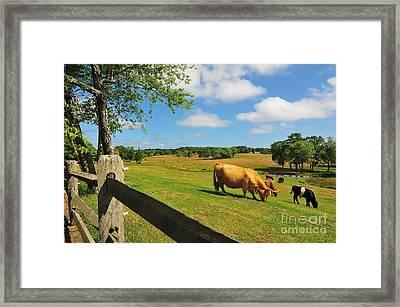 Massachusetts Farm Framed Print by Catherine Reusch Daley