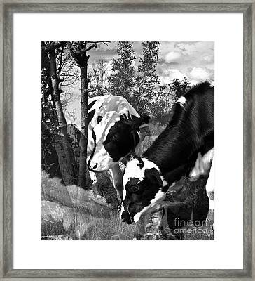 Matilda And Zoey In The Warm Afternoon Sun Framed Print