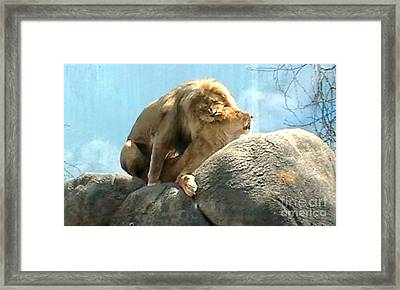 Mating Lions Framed Print by John From CNY