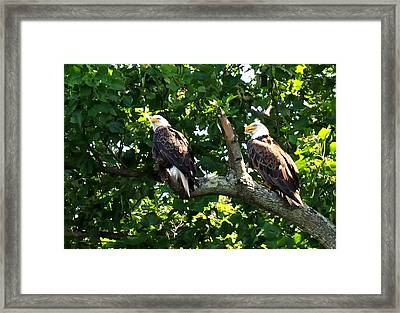Framed Print featuring the photograph Mating Pair by Randall Branham