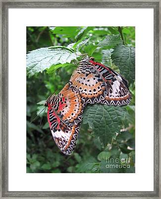 Mating Season Framed Print by Michelle H