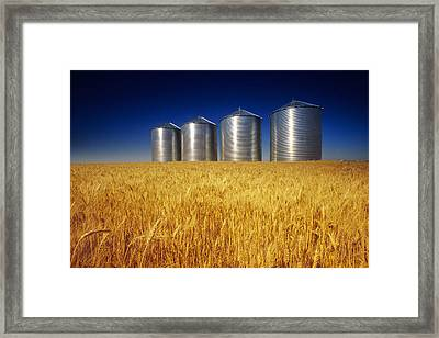 Mature Winter Wheat Field With Grain Framed Print by Dave Reede