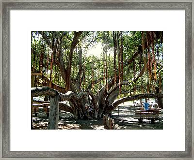 Framed Print featuring the photograph Maui Banyan Tree Park by Rob Green