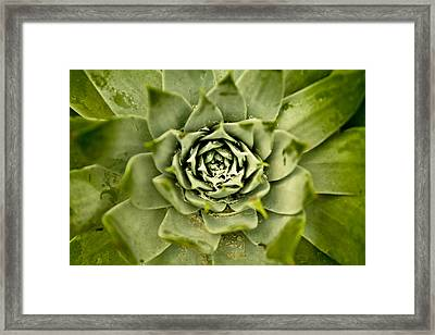 Framed Print featuring the photograph Maw by Justin Albrecht