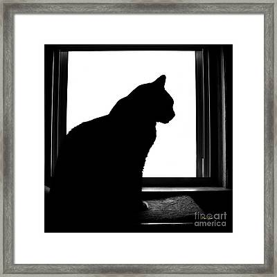 Max In Silhouette Framed Print