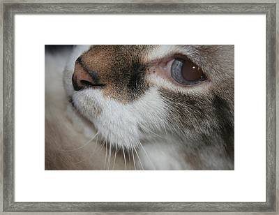 Framed Print featuring the photograph Max - Up Close And Personal by Lou Belcher