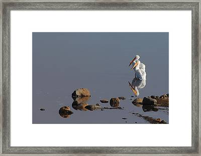 Me And My Gal Framed Print by Donna Blackhall