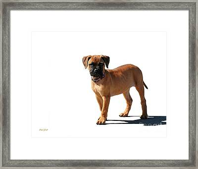 Me And My Shadow 2 Framed Print by Dale   Ford