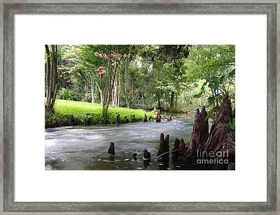 Mead Gardens Framed Print by Jennifer Zelik