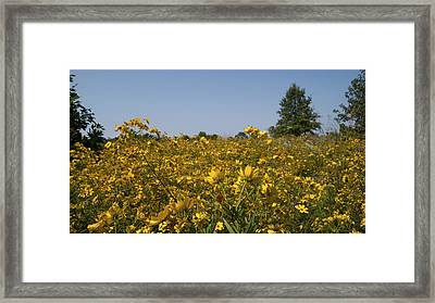 Meadow At Terapin Park Framed Print by Charles Kraus