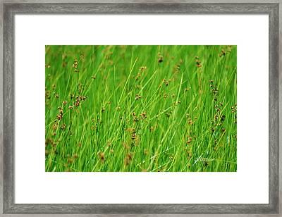 Meadow Framed Print