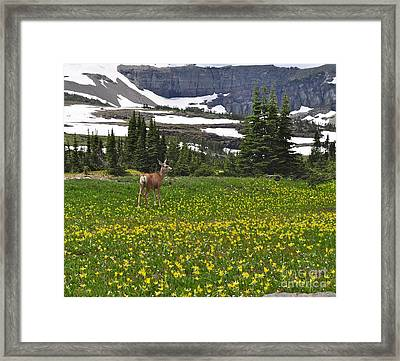 Framed Print featuring the photograph Meadow Deer by Johanne Peale