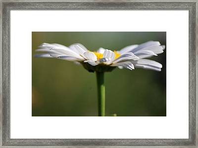 Meadow Pedals Framed Print