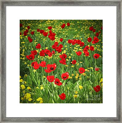 Meadow With Tulips Framed Print by Elena Elisseeva