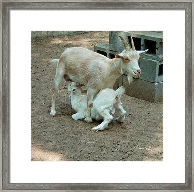 Mealtime Framed Print by Suzanne Gaff