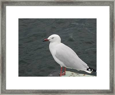 Framed Print featuring the photograph Mean Eye by Roberto Gagliardi