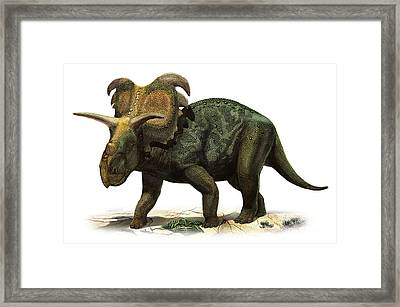 Medusaceratops Lokii, A Prehistoric Era Framed Print by Sergey Krasovskiy